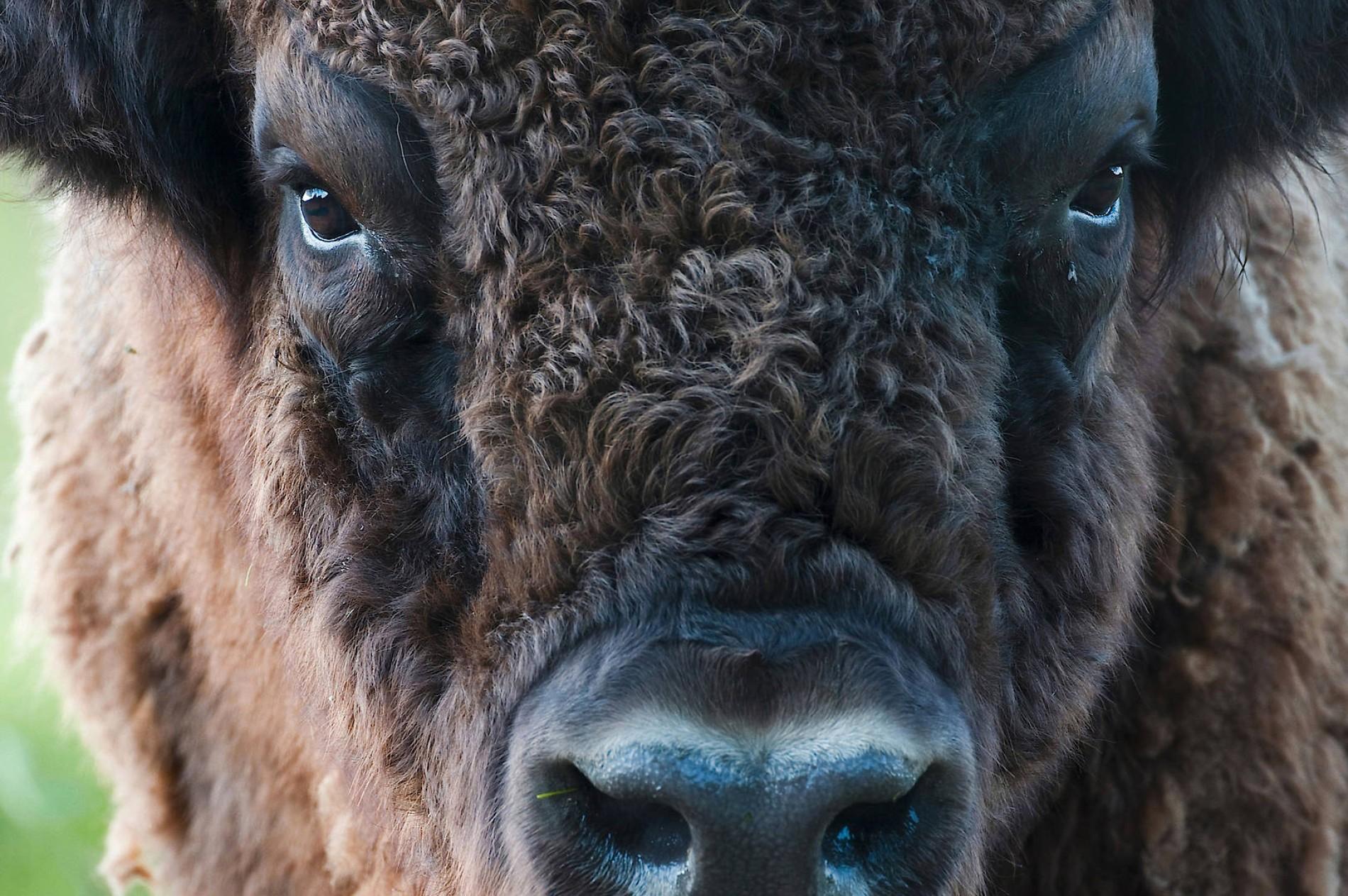 26 Tiere, die Datierung kennt, sind die schlimmsten