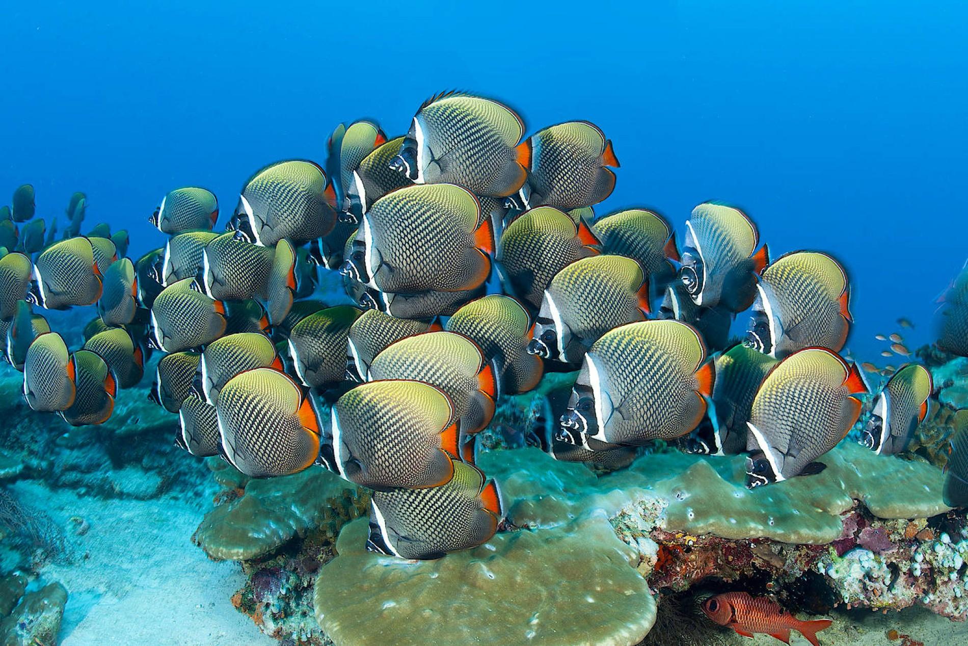 malediven wetter heute