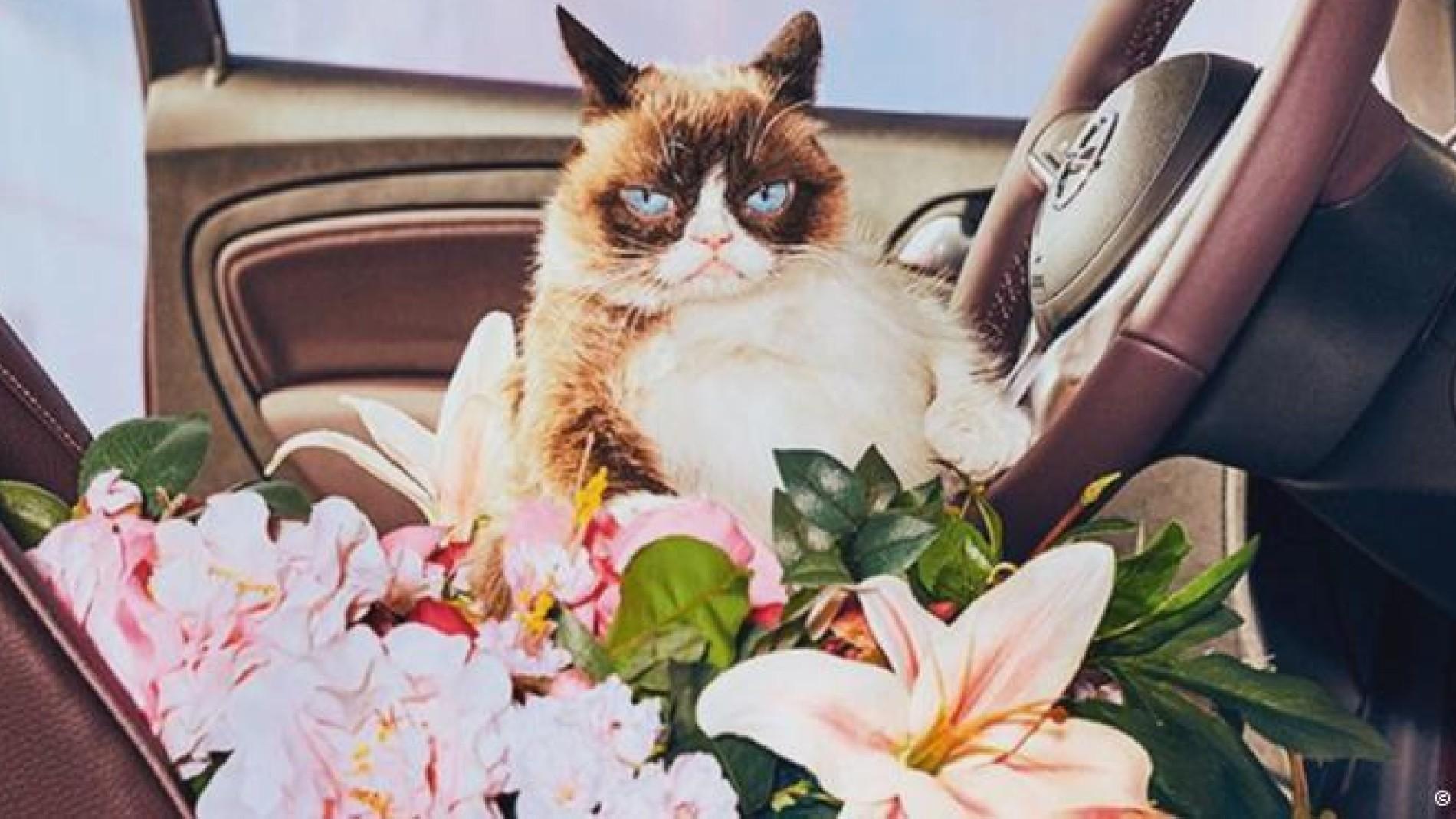 "kult-katze: ""grumpy cat"" steht auf opel - gesellschaft - faz"